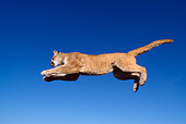 COU 01 TK0004 01