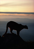 COU 01 TL0002 01