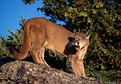 COU 01 TL0009 01