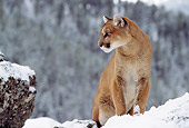 COU 01 TL0010 01