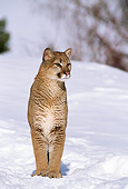 COU 01 TL0011 01