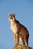 COU 01 TL0012 01