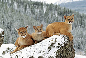 COU 01 TL0015 01