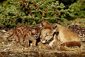 COU 01 TL0016 01