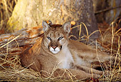 COU 01 TL0018 01