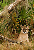 COU 01 TL0024 01