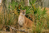 COU 01 TL0025 01