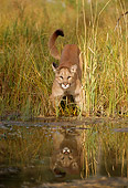COU 01 TL0027 01