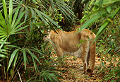 COU 01 TL0028 01