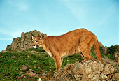 COU 01 TL0029 01