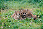 COU 02 GL0001 01