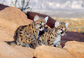 COU 02 MC0003 01