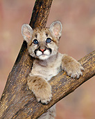 COU 02 RK0001 02