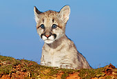 COU 02 RK0116 02