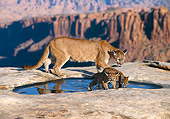 COU 02 RK0166 03