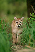 COU 02 DB0003 01
