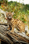 COU 02 DB0008 01