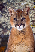 COU 02 NE0001 01