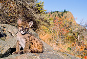 COU 02 NE0002 01