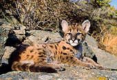 COU 02 NE0003 01