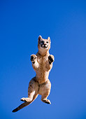 COU 02 NE0006 01