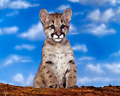 COU 02 RK0004 01