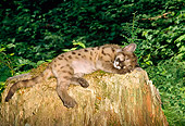 COU 02 TK0001 01
