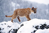 COU 02 TK0003 01