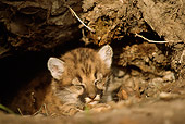 COU 02 TL0001 01