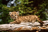 COU 02 TL0002 01
