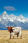 COW 01 KH0002 01