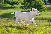 COW 01 KH0010 01