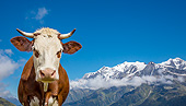 COW 01 KH0030 01