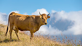 COW 01 KH0043 01
