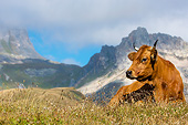 COW 01 KH0044 01