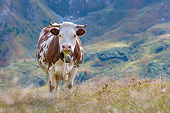 COW 01 KH0057 01