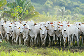 COW 01 SS0004 01