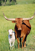 COW 01 DS0004 01