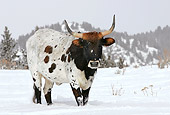 COW 01 KH0001 01