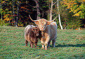 COW 01 LS0001 01