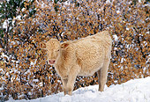 COW 01 RK0011 10