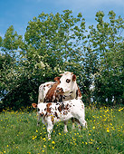 COW 02 GL0001 01