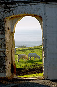 COW 02 JE0009 01