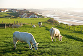 COW 02 JE0010 01