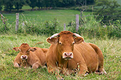 COW 02 JE0018 01