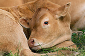 COW 02 JE0021 01