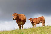 COW 02 JE0024 01