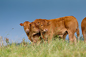 COW 02 JE0027 01