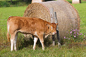 COW 02 JE0028 01