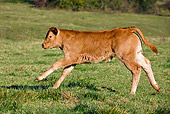 COW 02 KH0074 01